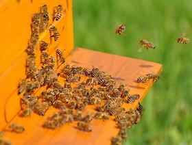 Chrońmy pszczoły