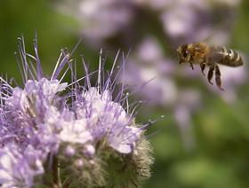 Pamiętajmy o pszczołach
