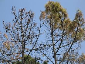 Groźny dla naszych lasów nicień przechwycony przez PIORiN w drewnianych skrzyniach importowanych z Chin