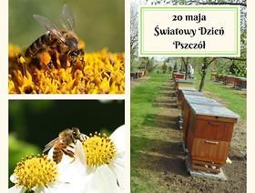 Dziś obchodzimy Światowy Dzień Pszczół
