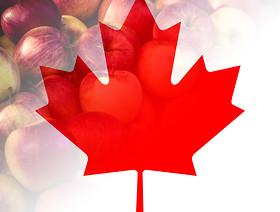 Eksport jabłek do Kanady