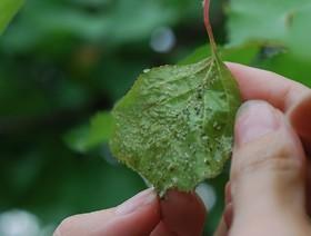 Raport nr 15 - nowe zagrożenia fitosanitarne dla Polski