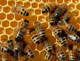 Zagrożenia dla pszczół i innych zapylaczy