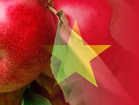 Eksport jabłek do Wietnamu
