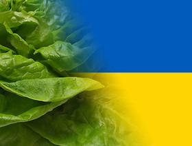 Eksport sałaty/warzyw liściowych na Ukrainę